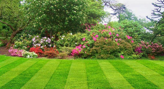 Tips On How To Maintain Your Garden